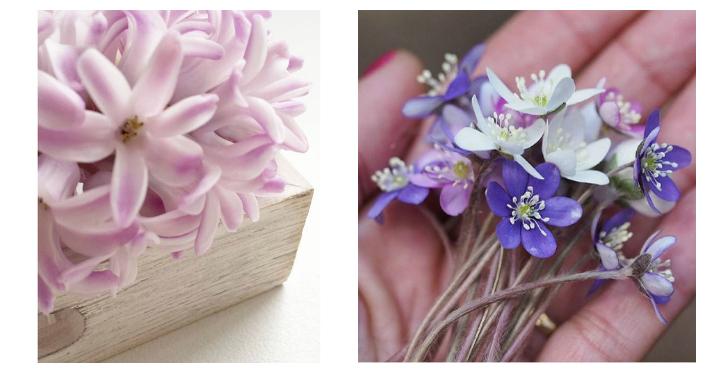 jacinto y flor lila