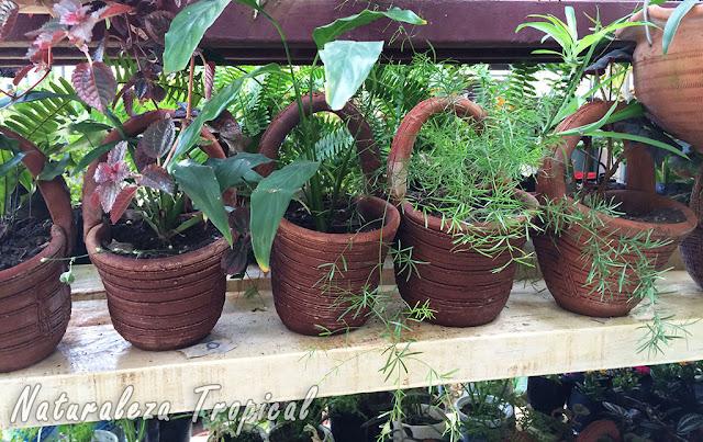 Estante con plantas ornamentales