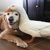 Inseparable Dog And Duck Prove Friends Don't Have To Be Birds Of A Feather