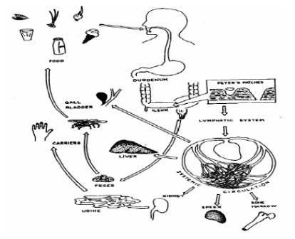 diagram of inside of a 747 diagram of fever infection landscapes: typhoid fever #3