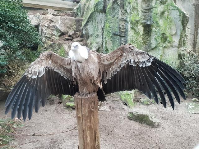 נשר פורש כנפיים
