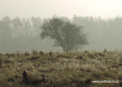 Lone Hawthorn, Hob Moor, York