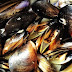 Tinolang Tahong   Steamed Mussels Recipe