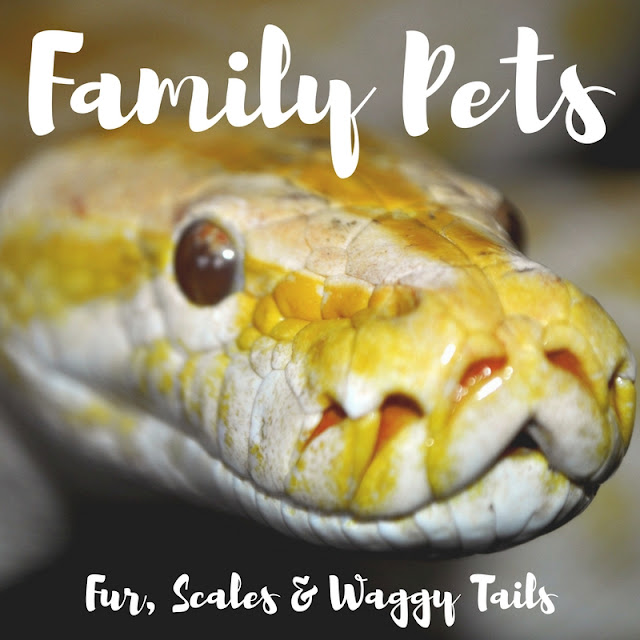wafflemama family pets gt gt fur scales amp waggy tails