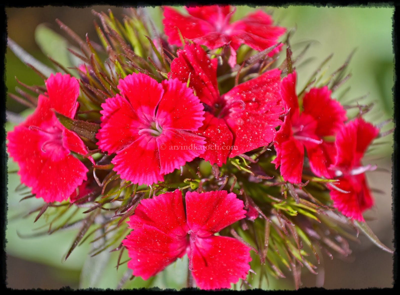 Arvind Katoch Photography Set Of Natural Beautiful Red