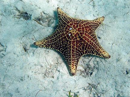 GambarGambar Bintang Laut  wallpaper