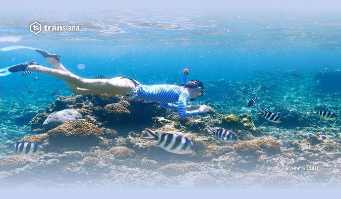 8 Tempat Snorkling Terkeren di Dunia
