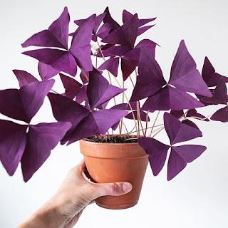 Kwiat szczęścia i miłości