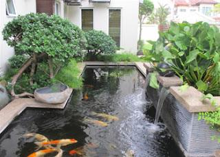 Kolam ikan hias minimalis halaman rumah