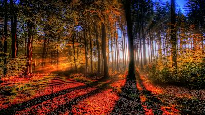 Camino naranja por el bosque con sol resplandeciente de fondo