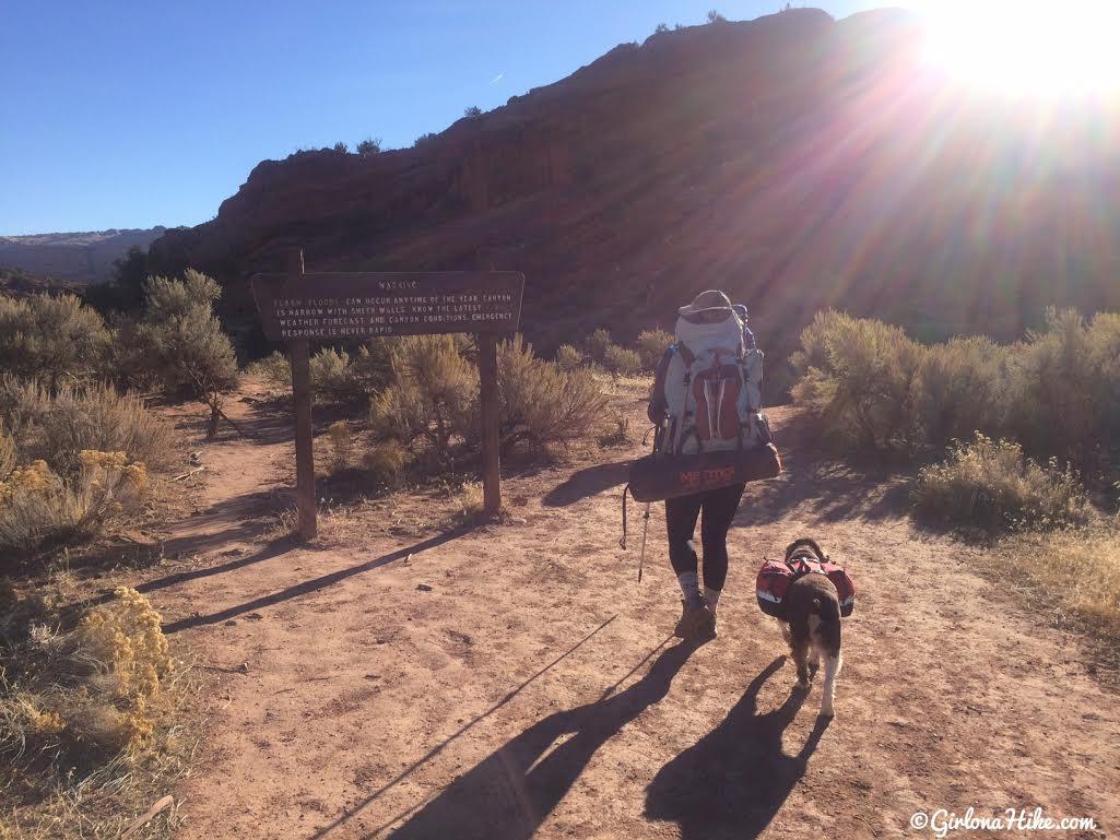 Can Dogs Hike Buckskin Gulch