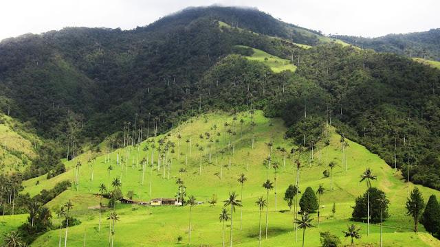 Valle de Cocora - Colômbia