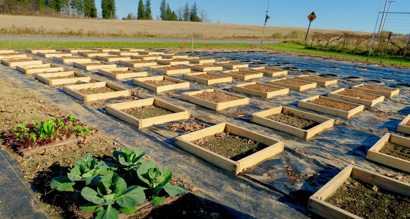 Upland Back To Eden Gardeningvs Minibeds On Plastic Part 3