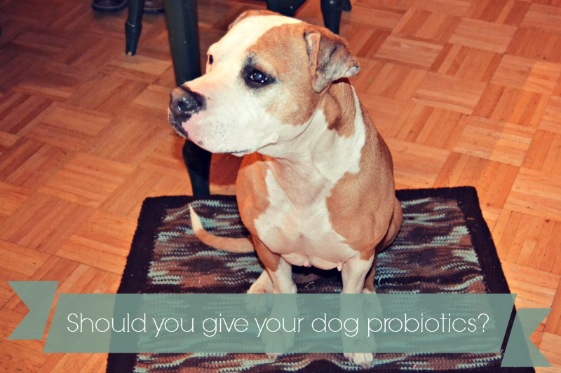 Benefits of probiotics for dogs
