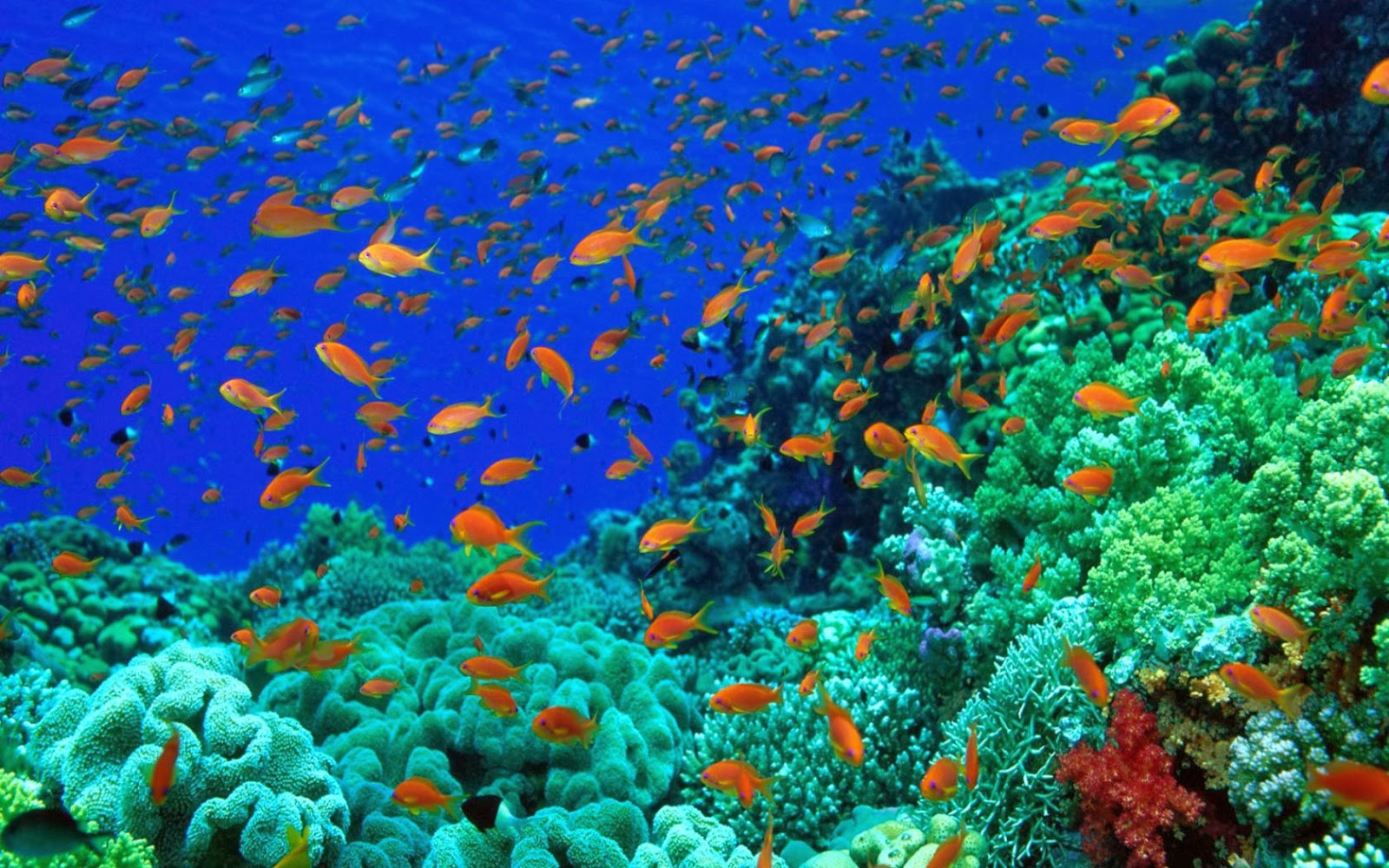 20 Wallpaper Bawah Laut Terbaru Bangiz