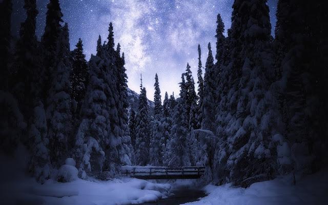 Papel de parede grátis Paisagem Natural Floresta com Neve para PC, Notebook, iPhone, Android e Tablet.