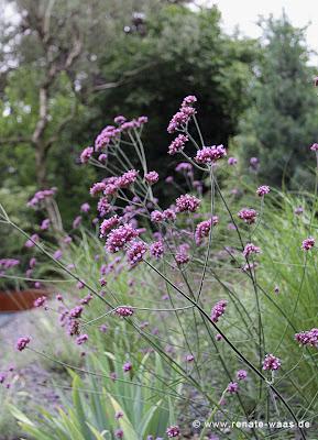 Schotterbeet, Verbene, Gräser, Iris, Lavendel, Salbei und andere trockenheitsliebende Stauden und Gräser