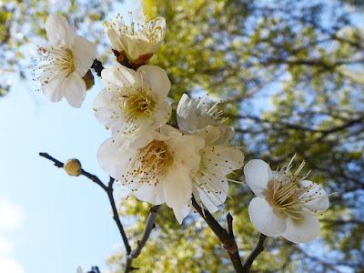 意賀美神社の梅林