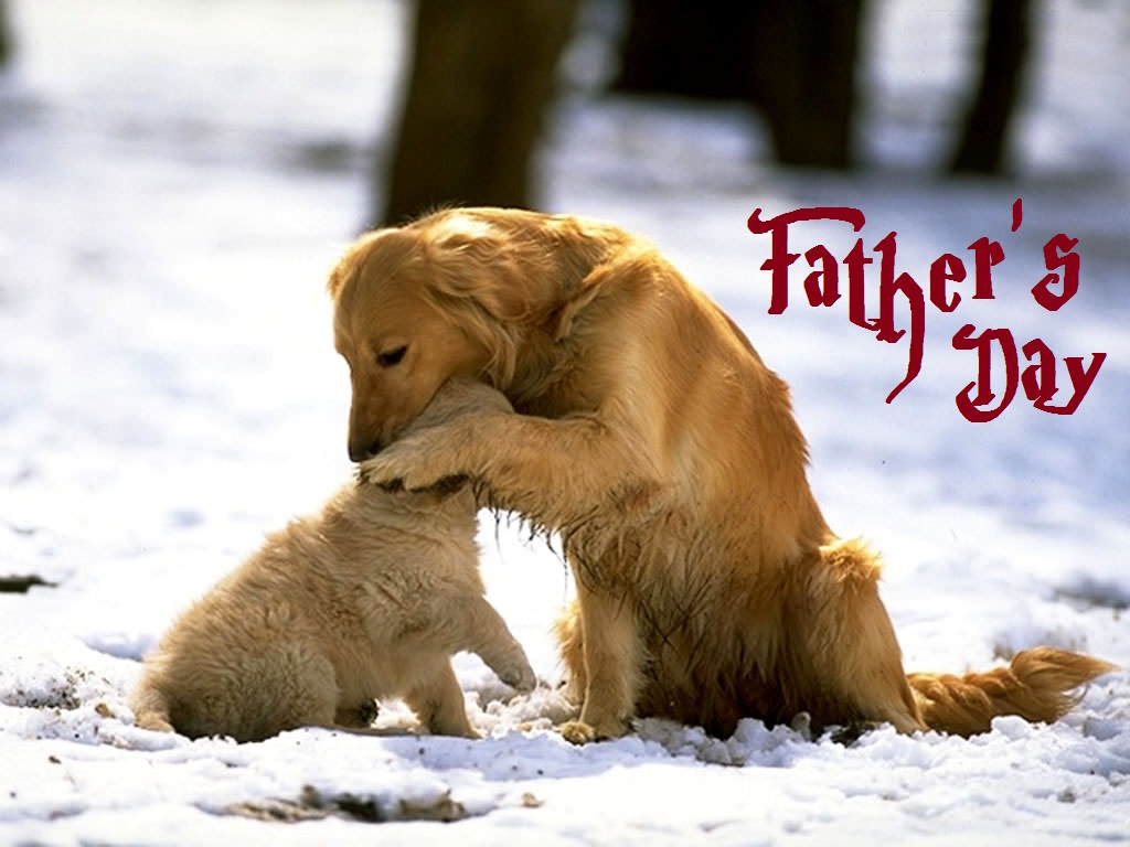 Cute Baby Girl Wallpaper For Desktop Cute Dog And Dogi Celebrated Father S Day Festival Chaska