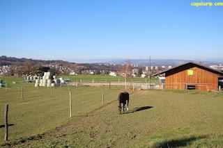 Peternakan kuda di Steingrubenweg