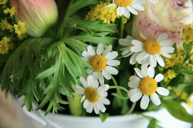 פרח הקמומיל (בבונג) צילום אורנה לבנה