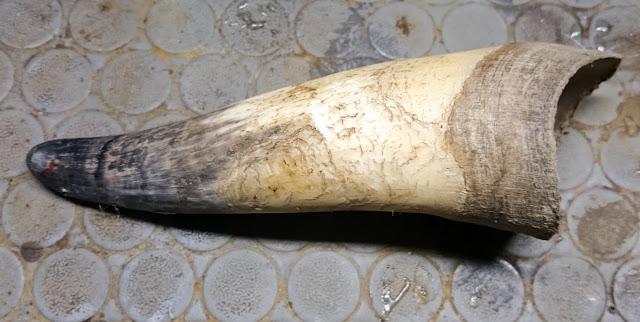 come lavorare il corno di vacca per coltelli serramanico 1700 xviii secolo