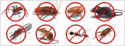رش مبيدات باﻻحساء