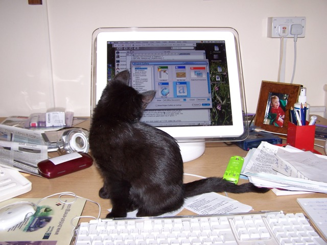 George Online Cat Author And Behaviourist Normal Service Will Be