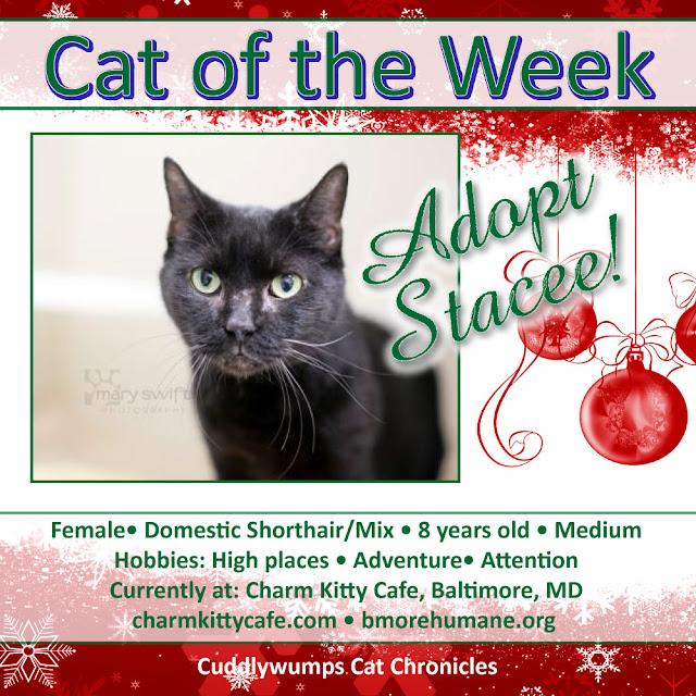 Adopt Stacee, Baltimore Humane Society #adoptablecats #blackcats #adoptdontshop #baltimorehumane