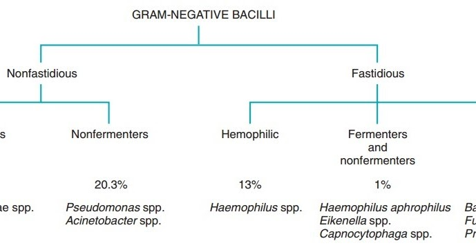 Microbiology Atlas Of Haemophilus And Other Fastidious Gram Negative Bacilli Free Medical Atlas