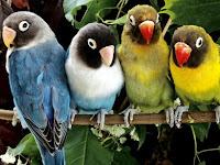 Parrots Puzzle