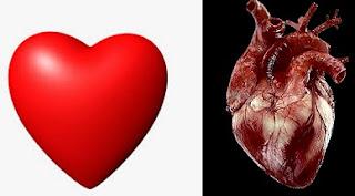 inima reala si simbol