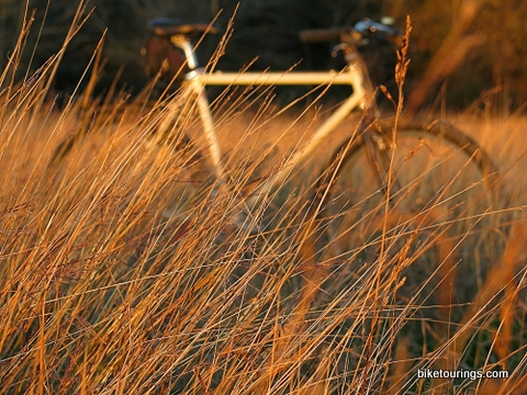 Picture of mountain bike and tall grass