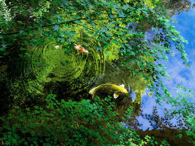 New leaves above the pond: Tsurugaoka-hachimangu
