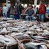 Revitalisasi Tempat Pelelangan Ikan Penjaringan akan Dimulai