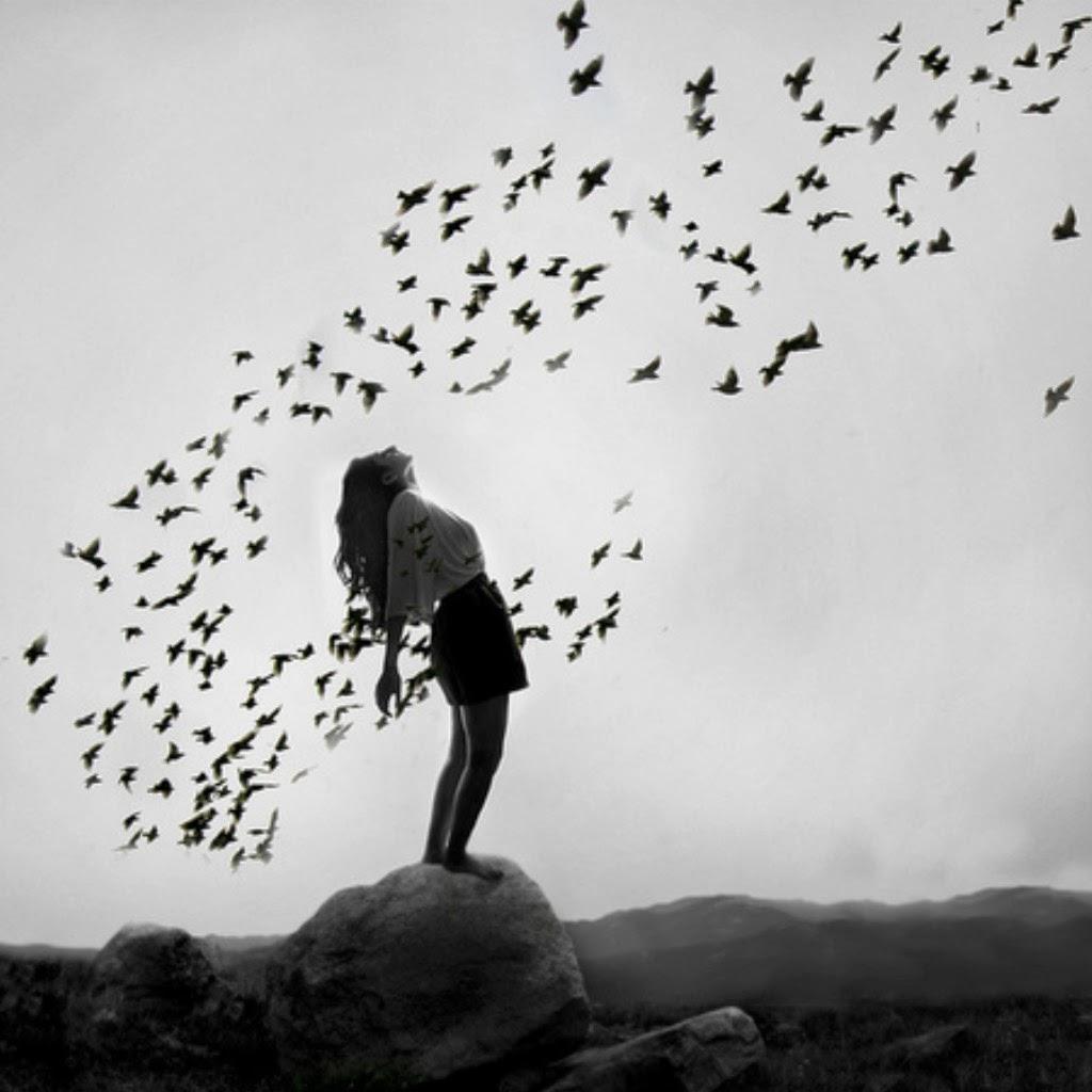 Άσπρα πουλιά – Μαύρα πουλιά