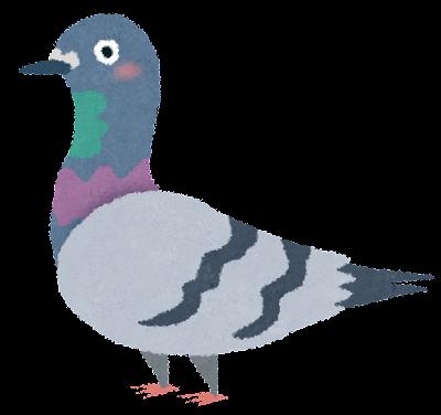 灰色の鳩のイラスト(鳥)