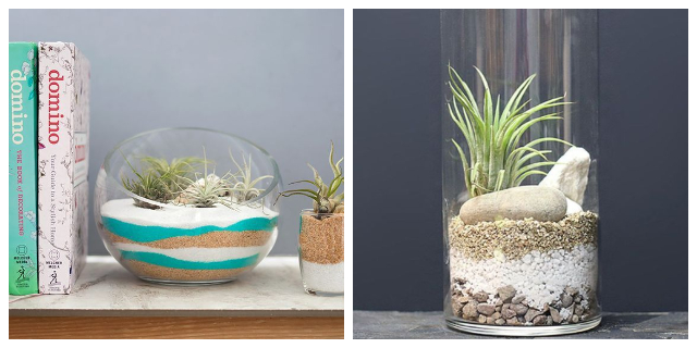 TERRARIUMS IDEAS