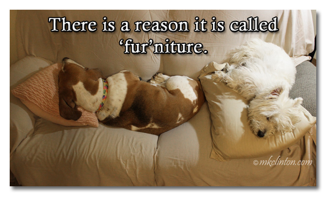 There is a reason it is called 'fur'niture meme