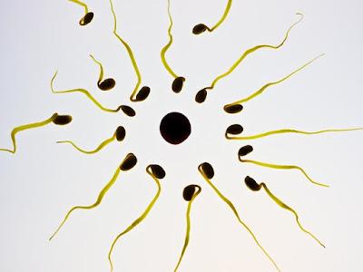 Korzyści sperm retention