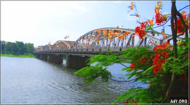 Hoa phượng đỏ bên cầu Tràng Tiền - Xứ Huế