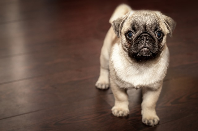 The 10 Best Dog Breeds for First Time Owners