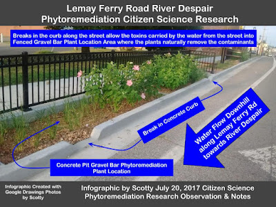Lemay Ferry Road Phytoremediation Citizen Science Research Proj