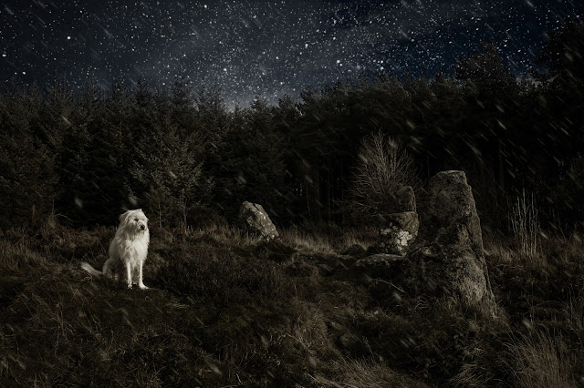 Jamie Emerson hairy dog photography aberdeen