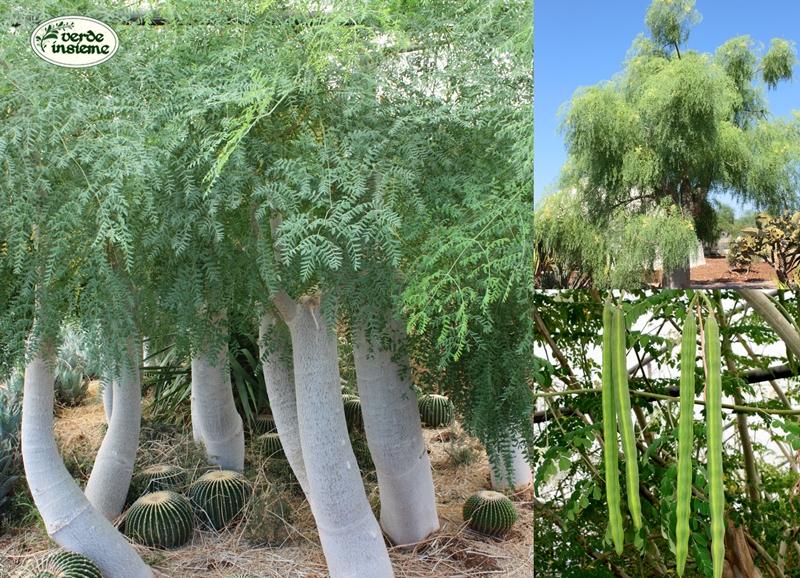 I vivai cuba ed il giardino delle piante madri for Tutte le piante grasse