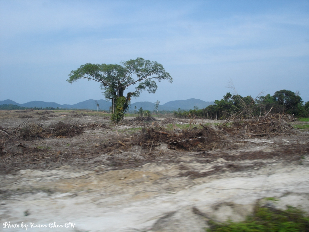 The Southern Article What Do You Know About Deforestation