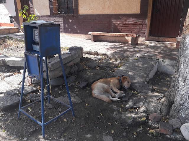 #CF Busco a mi amo. Estoy en avenida 1 calle 1 esquina Chapinero-Cúcuta Cel: 313-4214410 #RSY