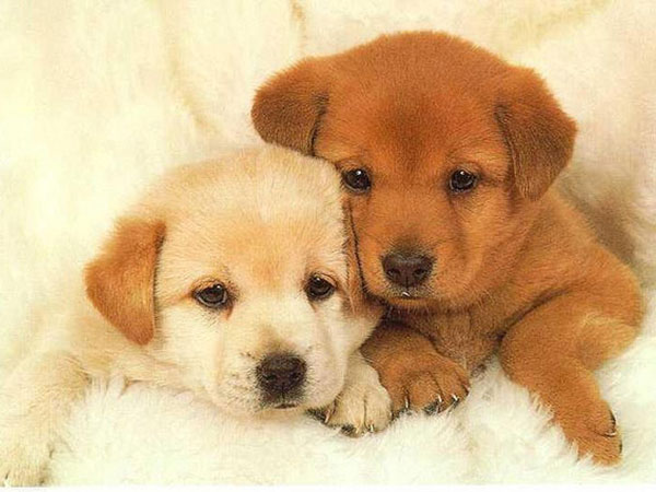 puppies cute dog puppy dogs perritos puppys cut adorable doggy slodive very perros together huddled chiots pups baby schattige cani