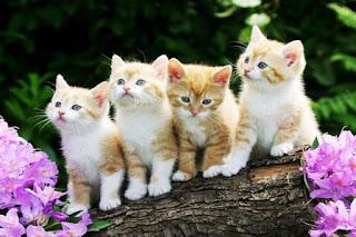 Tanda Kucing Mencintai Kita