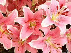Цветы женских имён